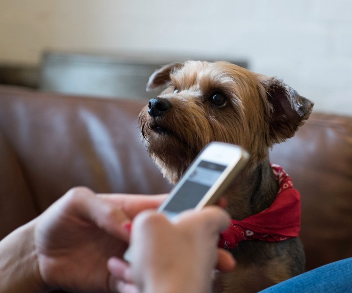 Dog looking at woman using Petfix ask a vet feature on her mobile