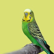 Picture of a bird