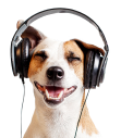 Picture of a dog with headphones
