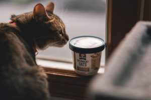 cat sniffing overnight oats