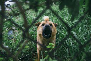 dog barking through a fence