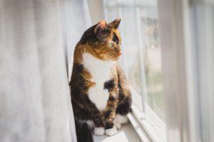 multi colour cat sitting on window ledge