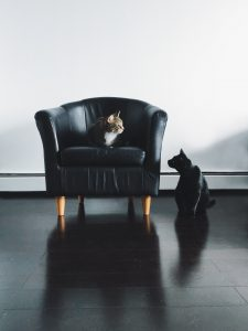One cat sitting on a black chair and one cat siting on the ground