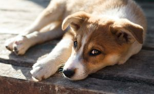 dog in prayer position