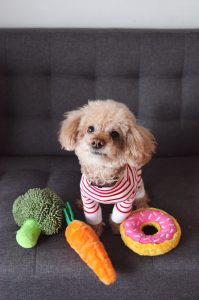 dog with teddies shaped like brocolli, carrot and donuts