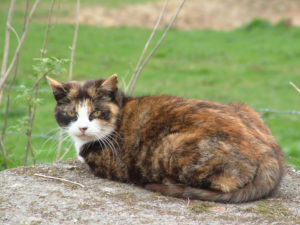 elderly cat with tortoiseshell fur