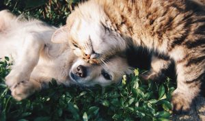 two pets lying down together