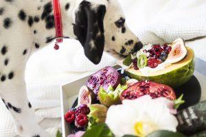 dalmation dog eat selection of fruit