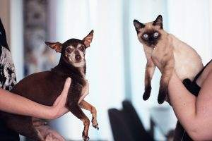 dog and cat being held up