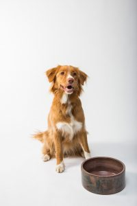 red dog with food bowl