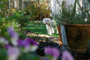 white dog in middle of garden