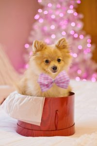 female dog with pink bow