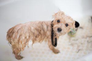dog wet after bath