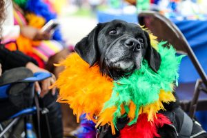 dog with multicoloured feather bow around neck