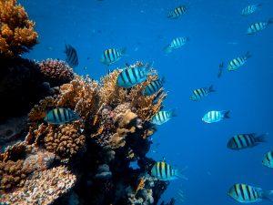school of blue fish in the sea
