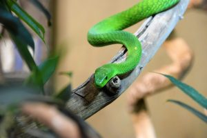 Green snake on a branch