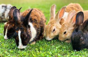 group of rabbits on grass