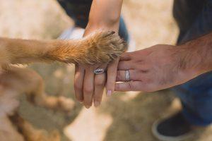 human hands and dog hand