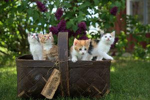 four cats together in a basket