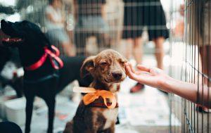 little brown puppy with orange bow