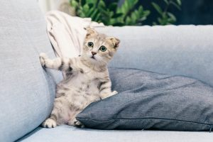 kitten sitting up on couch looking shocked