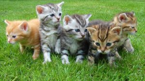five kittens on grass