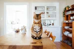 cat sitting on table in house