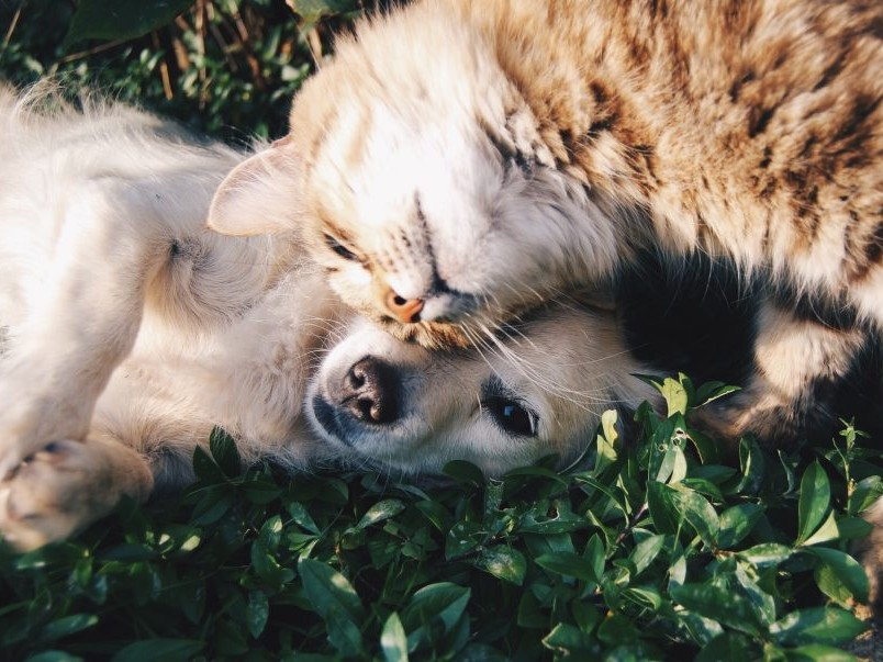 old dog and cat lying in the grass