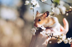 hamster in a flower plant
