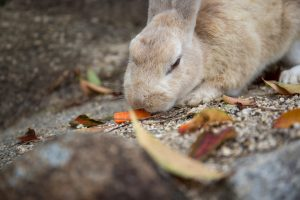 angry rabbit eating carrot