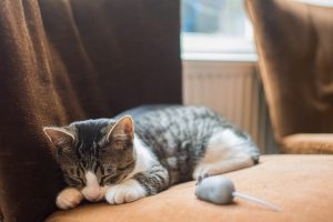 silver tabby cat lying beside toy mouse