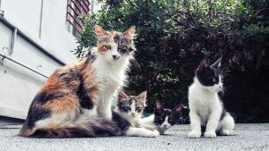 white and black long fur kittens