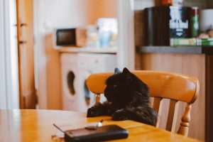 black cat sitting at kitchen table