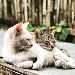two tabby cats laying beside each other outdoors