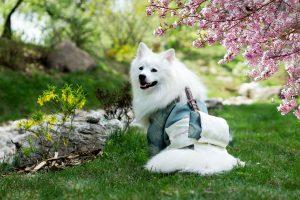 white coat fluffy dog in the park