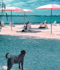 dog on beach with pink patio umbrellas