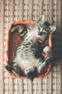 tabby kitten lying in orange basket