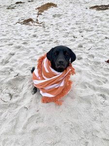 black dog sitting on white sand wrapped in towel