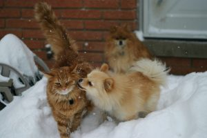 brown dog and cat playing in the snow