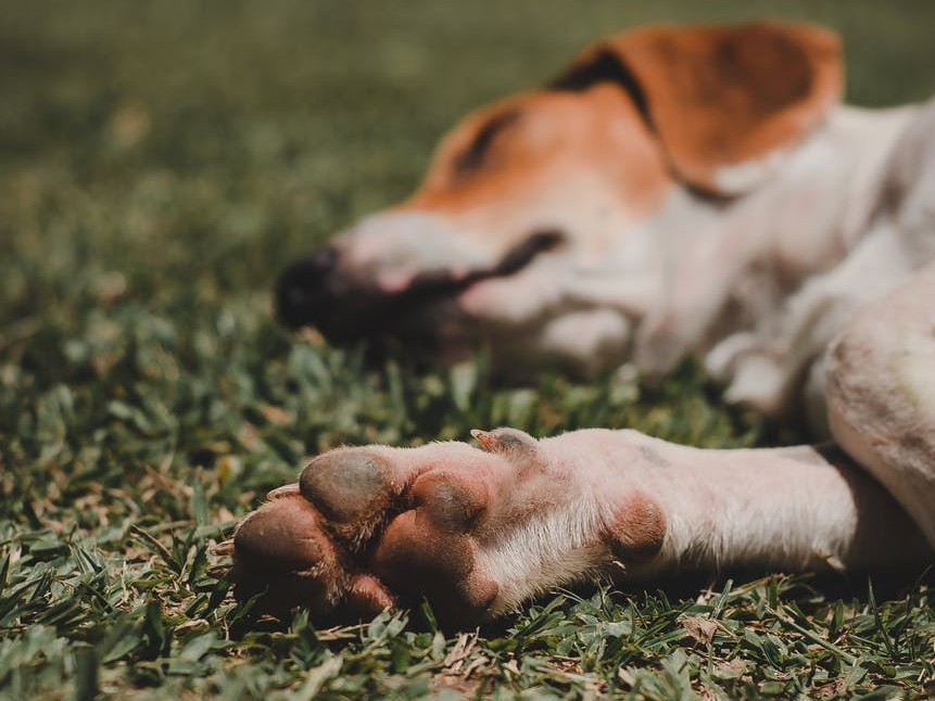 dog lying down on the ground