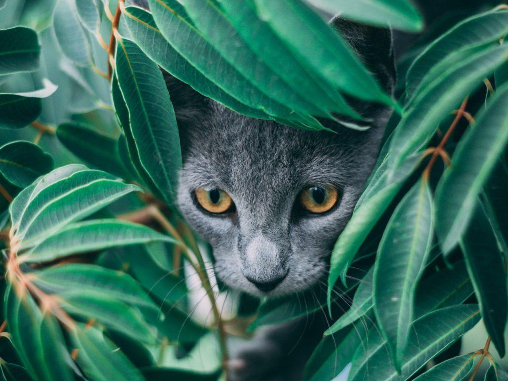 cat hiding in the bush