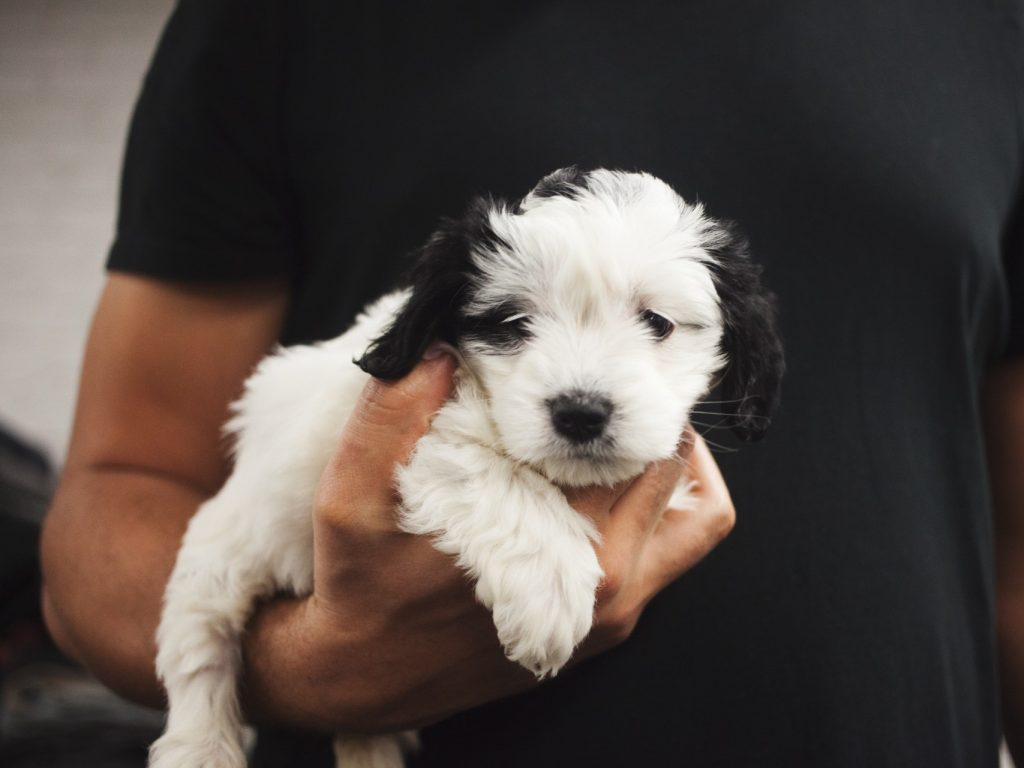 black and white puppy being held in mans arms