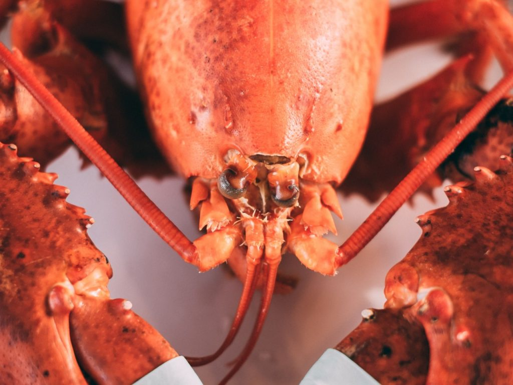 bright red lobster