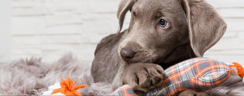 pet guide dog banner