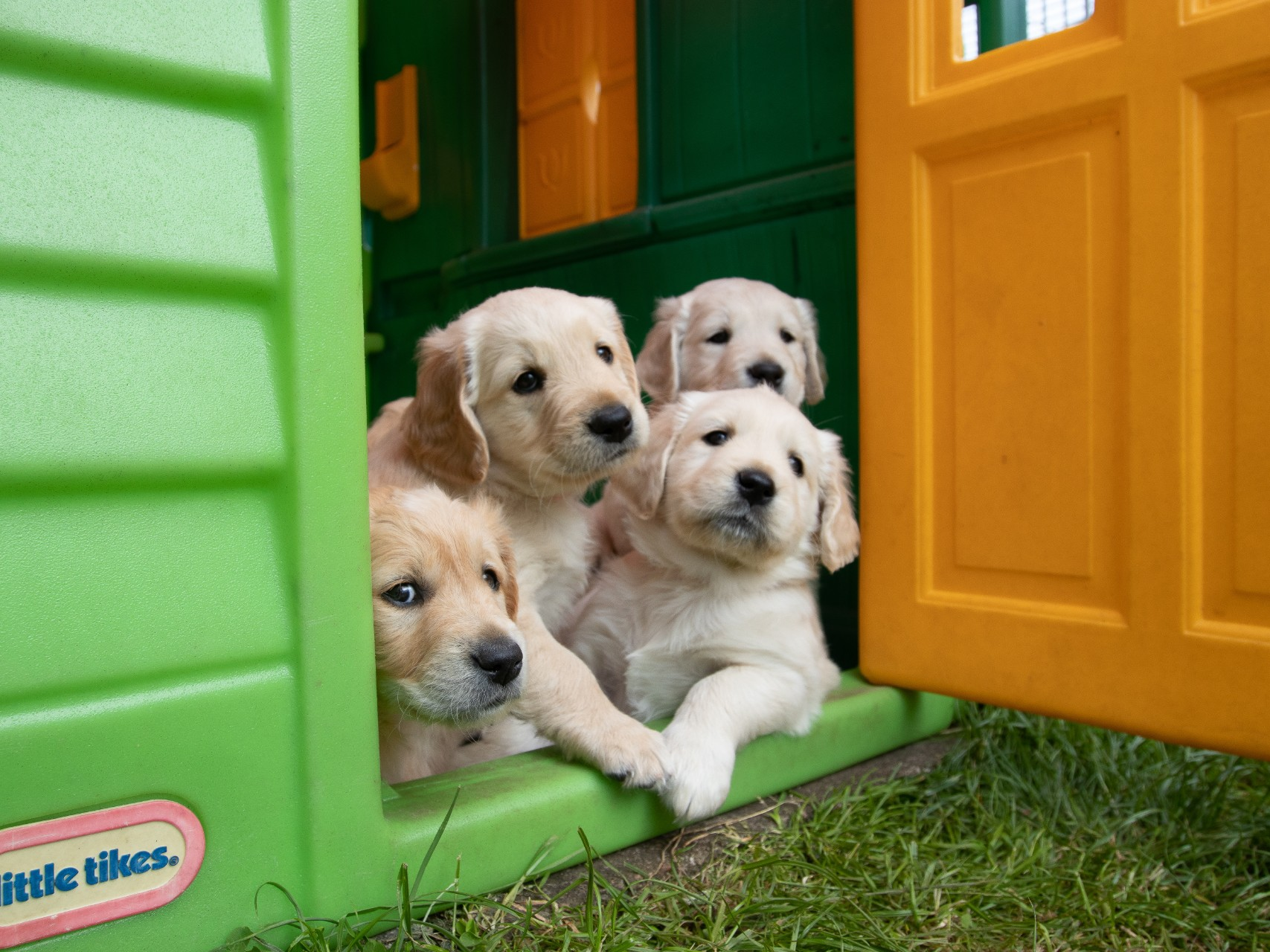four puppies in play house