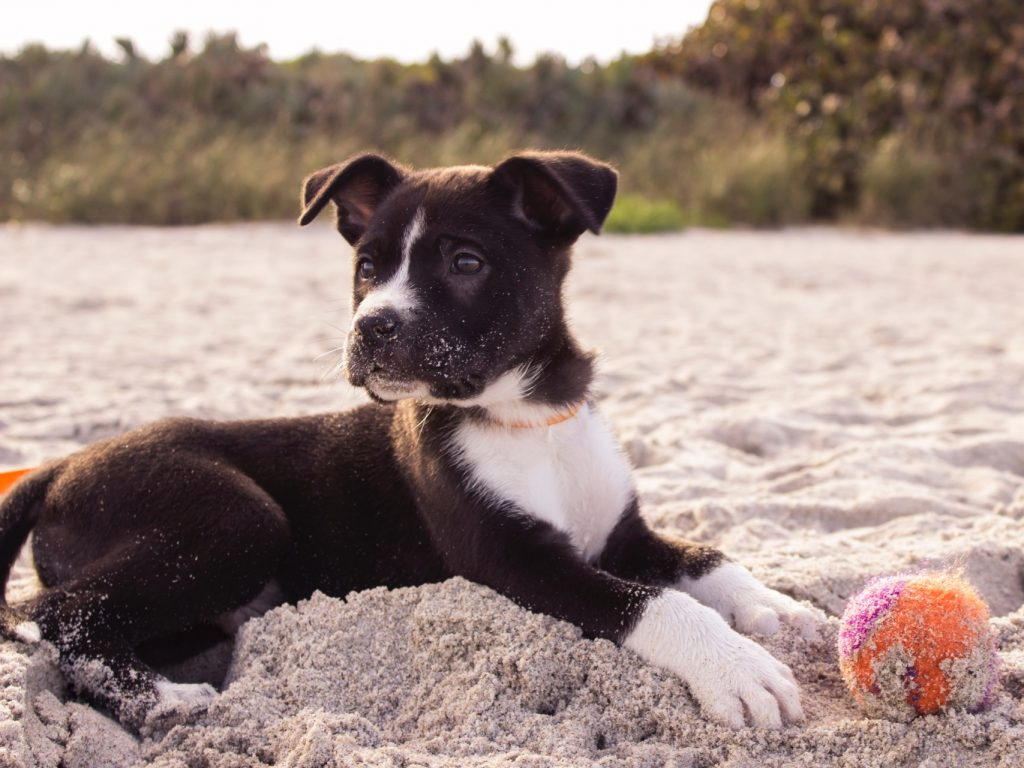 puppy with ball on beach