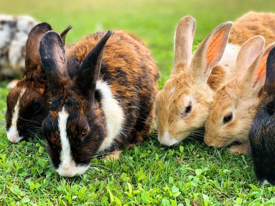 group of rabbits on the grass