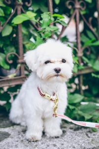 white maltese terrier dog sitting near plants