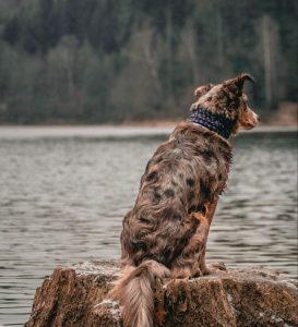 brown dog sitting on a rock beside water
