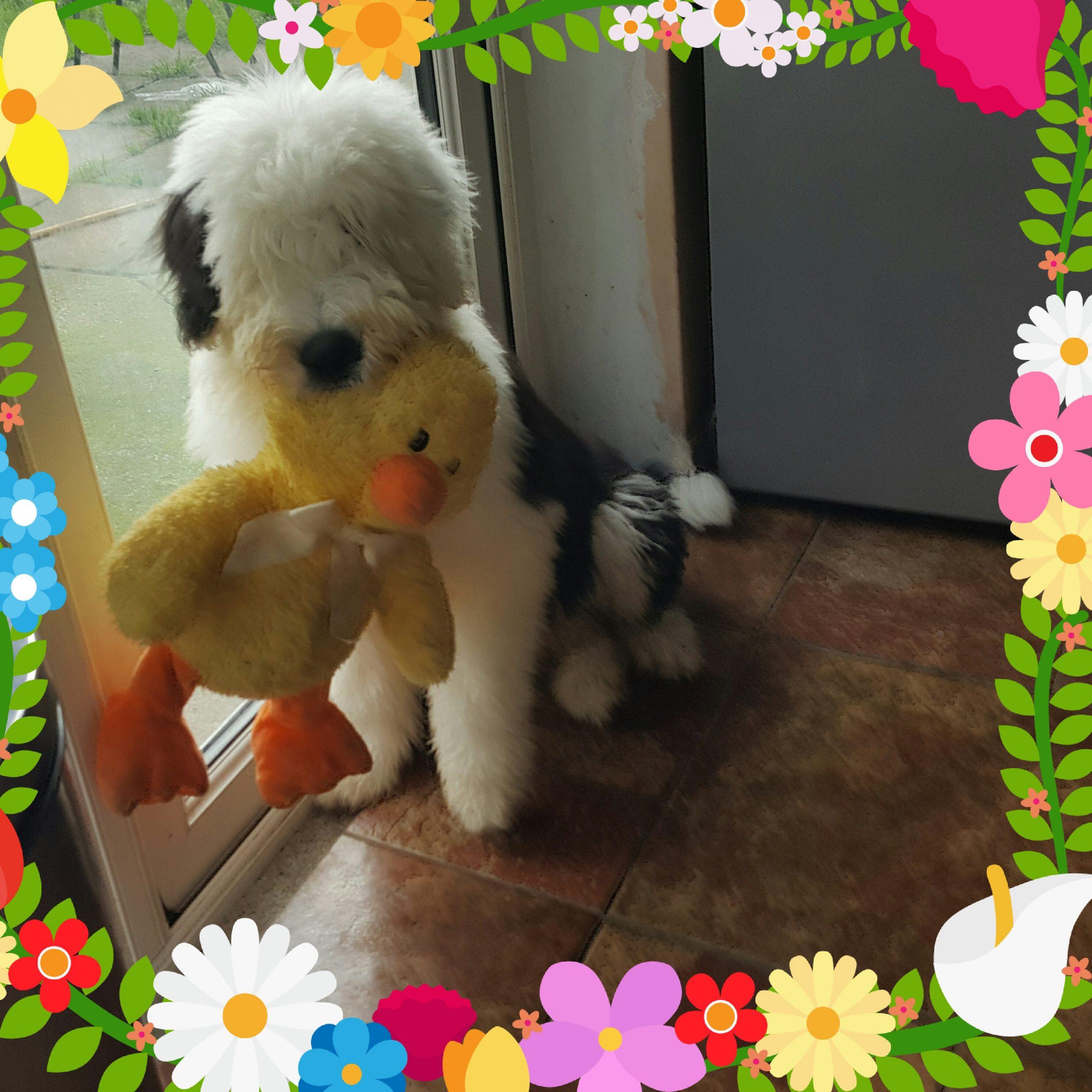 dog with plush toys